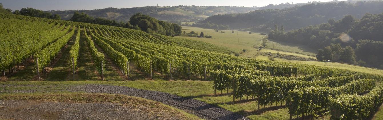 Domaine Montesquiou -Vin jurançon - Monein