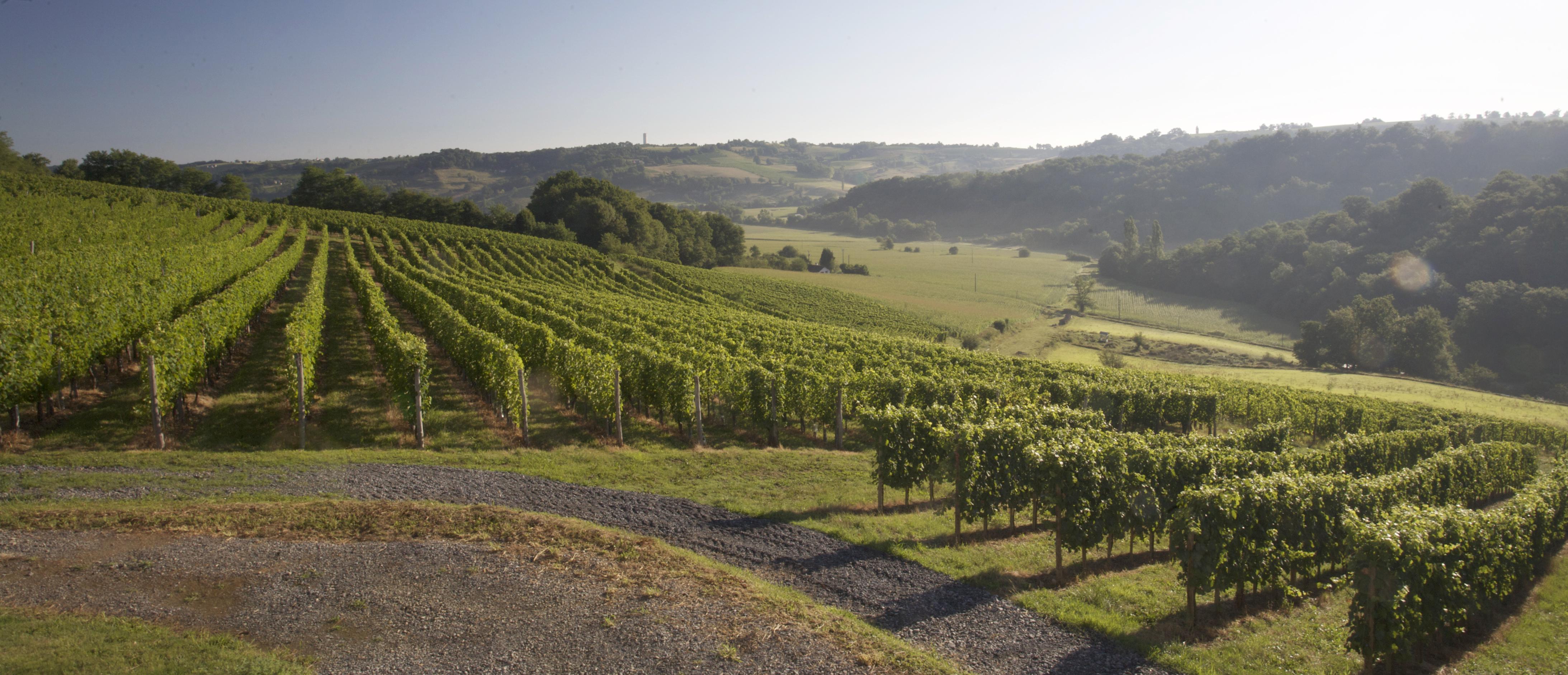 Vignoble Domaine Montesquiou - Vin jurancon - Monein