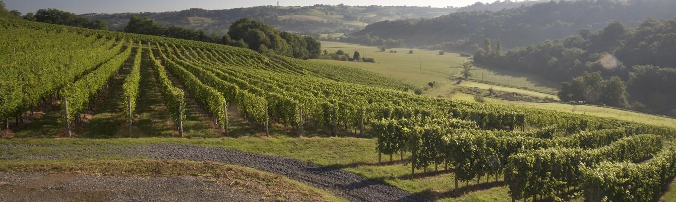 Vignoble Jurançon - Domaine montesquiou