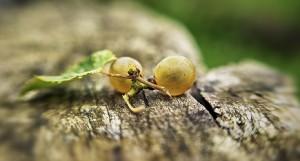 Grain de raisin- Domaine Montesquiou - Jurançon